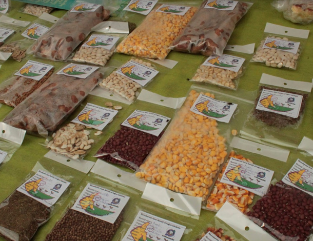 Paraguay: native seeds packaged and classified (photo: Maria Sanz Dominguez)