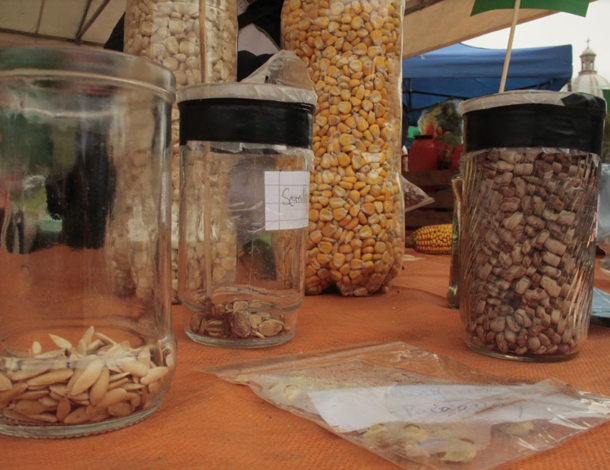 Paraguay: native seeds for exchange (photo: Maria Sanz Dominguez)