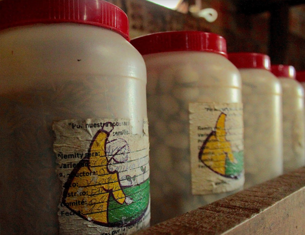 Paraguay: native seeds, preserved in jars (photo: Maria Sanz Dominguez)